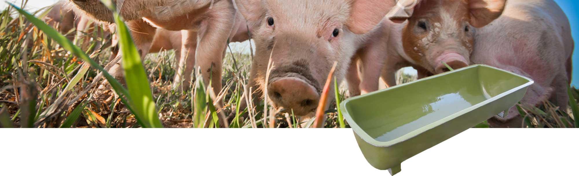 Schweine Futtertrog aucg Sautrog genannt